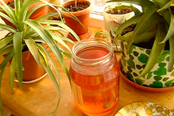 Рецепт подкормки для комнатных растений