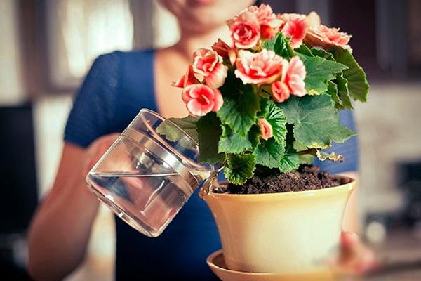 Секретный ингредиент для цветения комнатных растений, который всем знаком